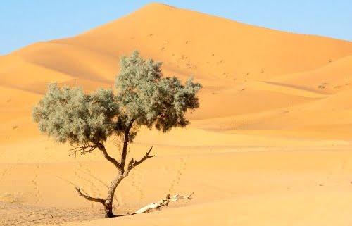 Karavaanroute 3-woestijntocht Marokko