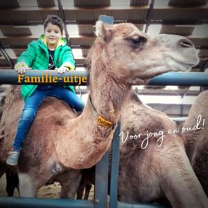 Kamelenmelkerij & diner La Cocotte