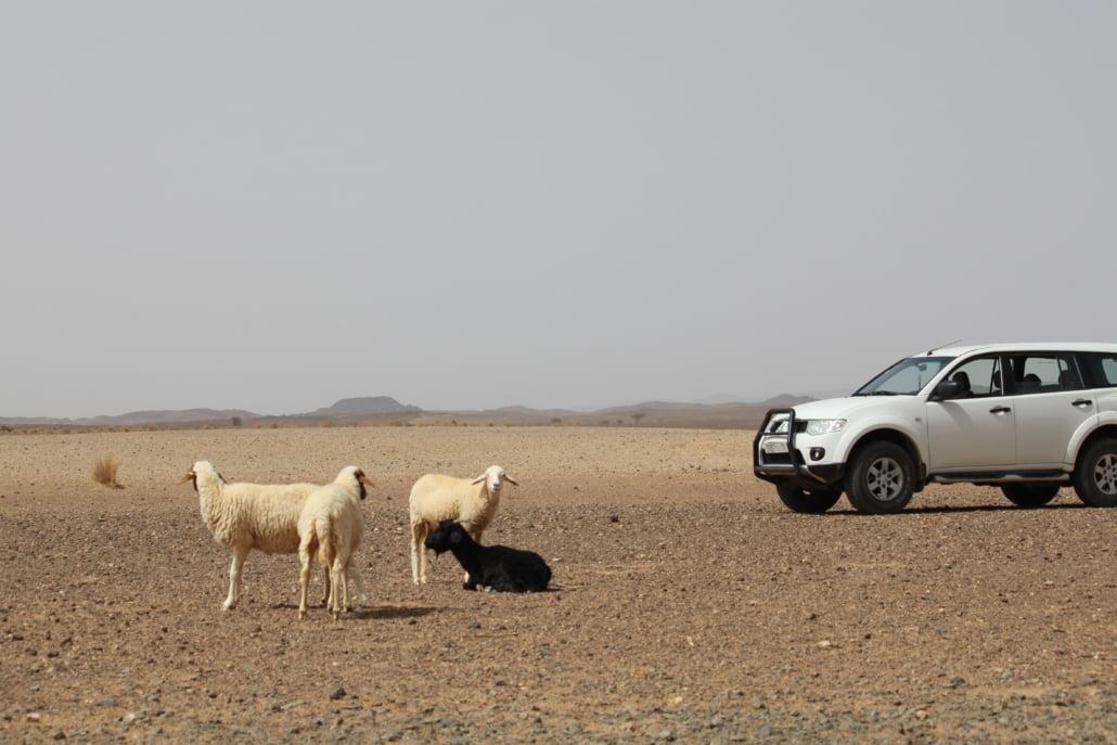Luxe SUV woestijnreis Marokko