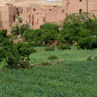dades-reizen-individueel-marrakech-en-het-zuiden-5