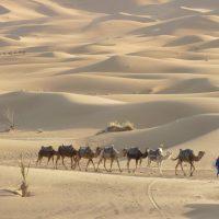 dades-reizen-individueel-marrakech-en-het-zuiden-6