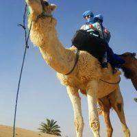 dades-reizen-soeks-en-sahara-kameel